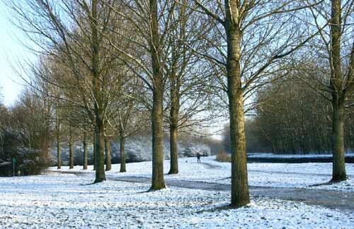 Amsterdam, i Parchi. Rembrandtpark in Inverno