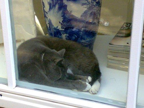 Un gatto dietro la finestra ad Amsterdam